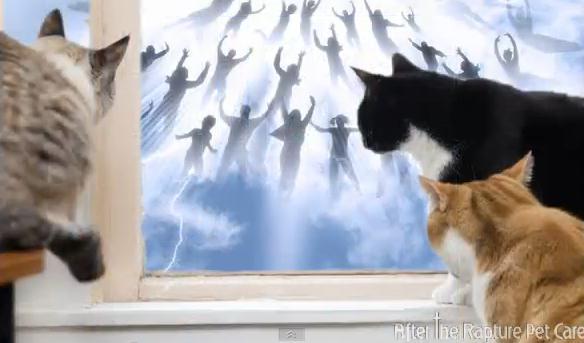 Huisdieren na de Opname